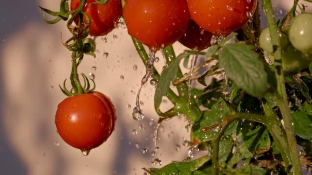 SLO MO Water Drops Splashing Agains Tomatoes video