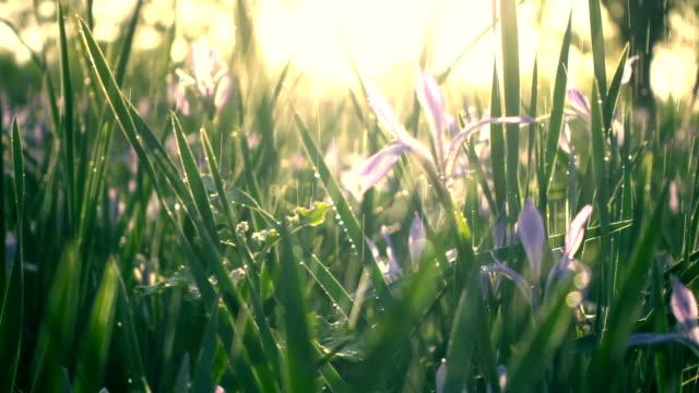 stockvideo's en b-roll-footage met water vallen op groen gras - regen zon