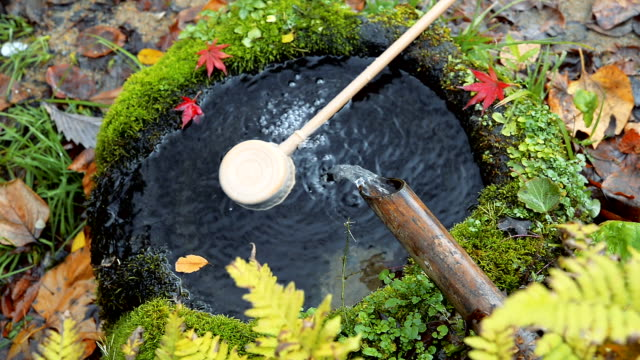 HD MS: Water flow down to pond sacred, Japan Water natural flow down to pond sacred people can drink maple leaf videos stock videos & royalty-free footage