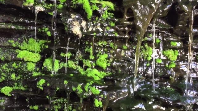 石の壁から緑の苔で流れる水 - 石垣点の映像素材/bロール