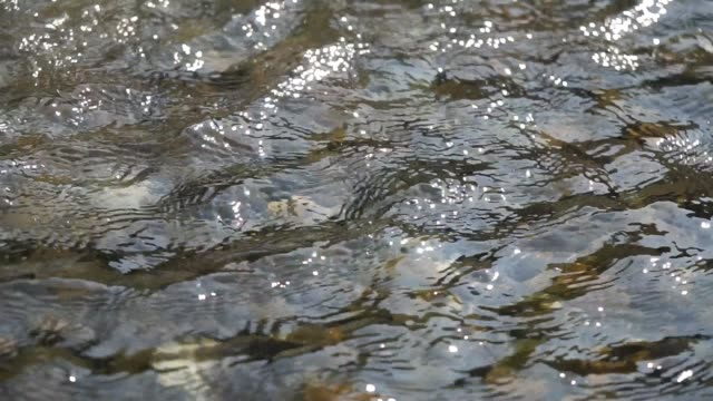 water foam wave moving in the river