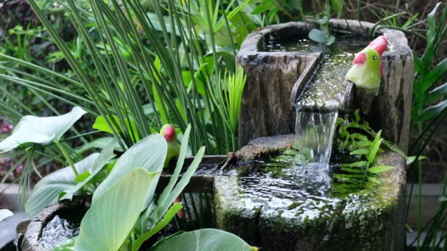 water from fountain with aquatic vegetation - fontana struttura costruita dall'uomo video stock e b–roll