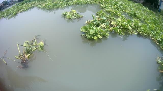 giacinto d'acqua sul fiume - gambe incrociate video stock e b–roll