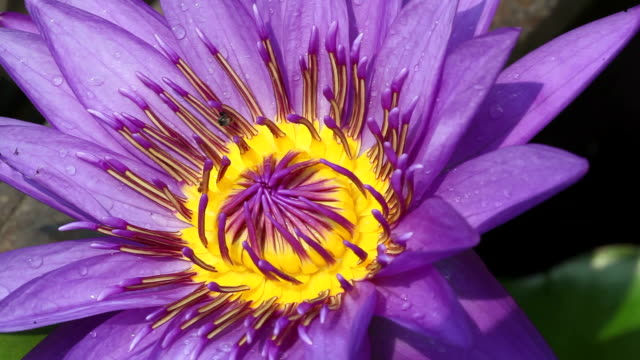 Water lily and Incest  animal limb stock videos & royalty-free footage