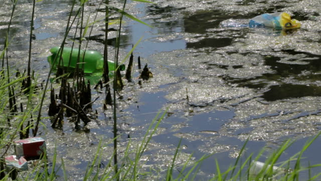 Water pollution. Water pollution with plastic bottle and other garbage. duckweed stock videos & royalty-free footage