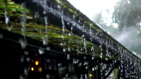 vidéos et rushes de slo mo l'eau goutte du toit de la mousse de maison avec brouillard - pluie