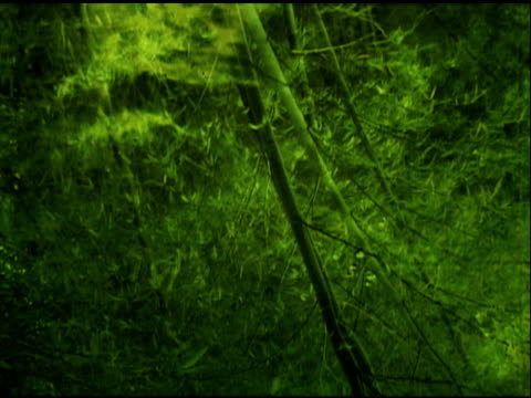 Water Reflection of Bamboo Forest in Asia (NTSC) video