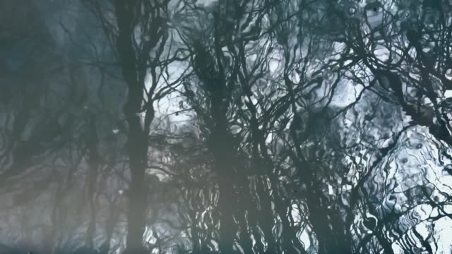 water reflection reflection of trees in a forest being distorted in ripples and turning back to normal double refraction stock videos & royalty-free footage