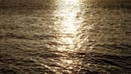 istock Water ripples before sunset 1213242983