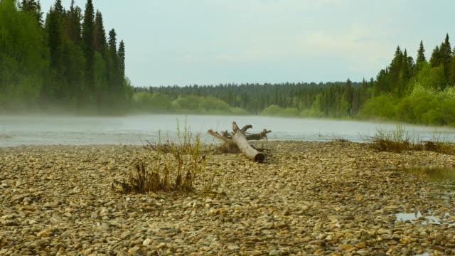 vídeos de stock, filmes e b-roll de água rasa em close-up rio de anjar - bétula