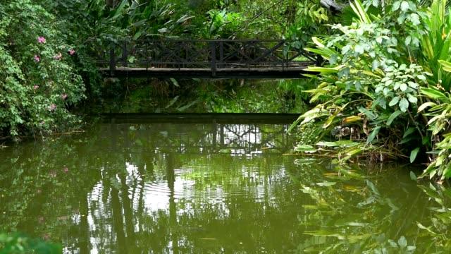 vatten på huden, träbro över dammen - städsegrön växt bildbanksvideor och videomaterial från bakom kulisserna
