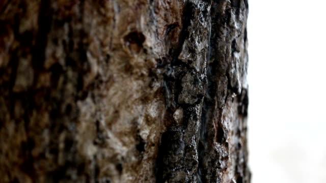 木の幹に摺動水 - ハリヤナ州点の映像素材/bロール