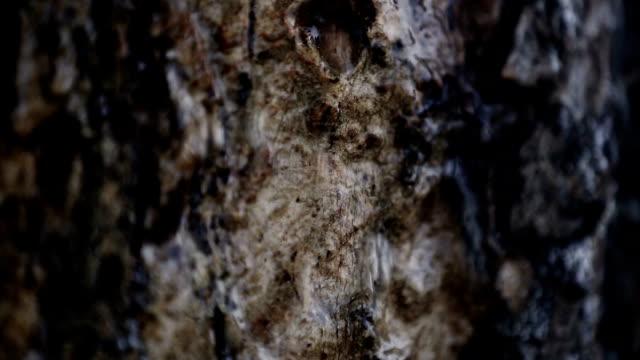 water sliding on tree trunk - haryana video stock e b–roll