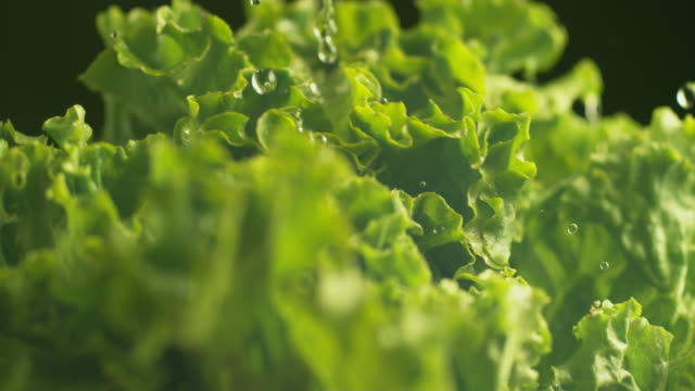 Water splashing onto lettuce in super slow motion.