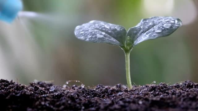 Pulvérisateur d'eau verte plants de légumes sur le sol. - Vidéo
