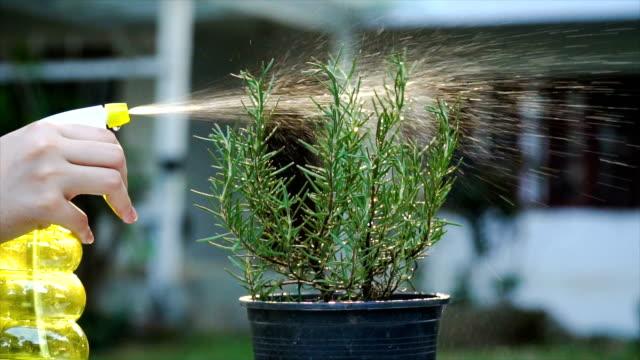 SLOMO Water spraying on rosemary