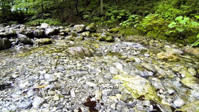 su akışı içinde milli parkı dolina bialego yakınındaki zakopane, polonya - zakopane stok videoları ve detay görüntü çekimi