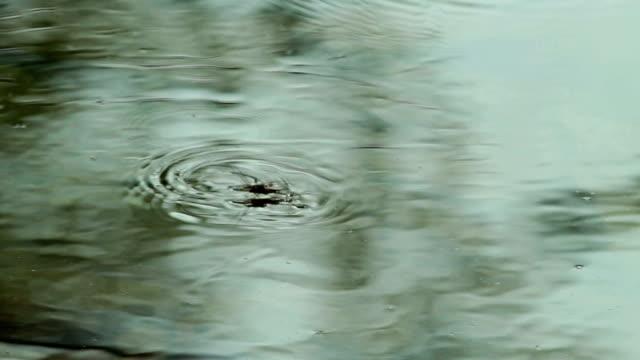 water strider walking on water after rain in the forest - uzun adımlarla yürümek stok videoları ve detay görüntü çekimi