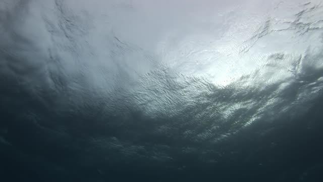 vídeos de stock e filmes b-roll de water surface amazing background of landscape of sea. - oceano pacífico