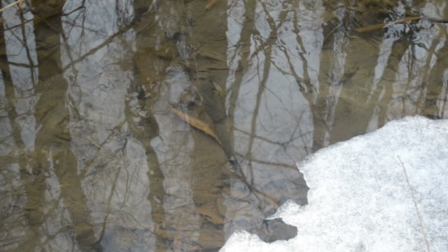 Water surface in brook with melting ice in spring video