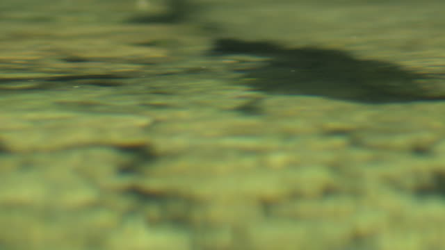Water surface in cave spring. video