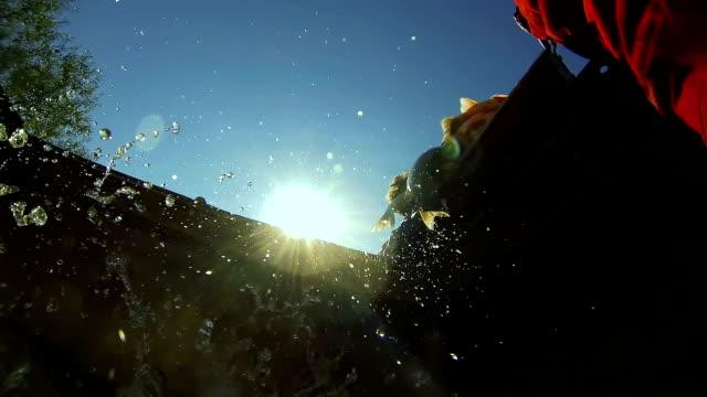 zbiorniki na wodę ze świeżym połowem ryb - karp filmów i materiałów b-roll