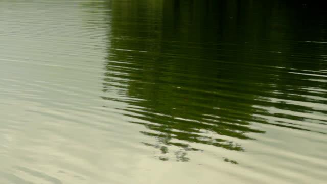 tragoss, styria, avusturya grunersee yeşil gölde yüzen su doku - styria stok videoları ve detay görüntü çekimi