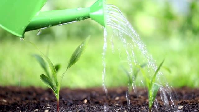 Eau les plantes dans le jardin - Vidéo