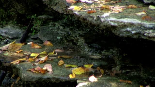 Water Trickling in Autumn Creek (NTSC_link_below) video