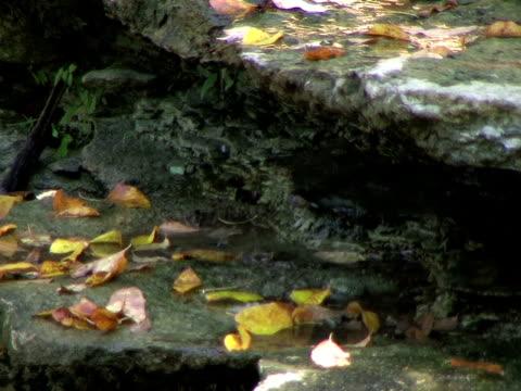 Water Trickling in Autumn Creek (HD_link_below) video