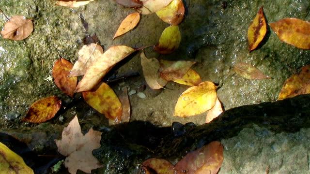 Water Trickling onto Leaves (NTSC_link_below) video