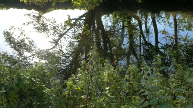 water with reflection water with reflection in forest park,Northern Ireland double refraction stock videos & royalty-free footage