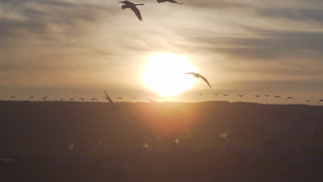 waterbirds video