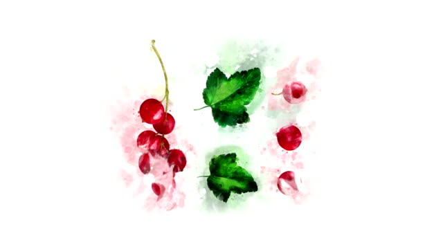 watercolor picture redcurrant appearance - ribes rosso video stock e b–roll