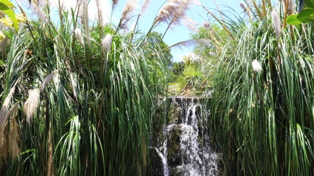 waterfall among the tropical vegetation