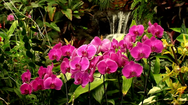 Waterfall and Orchids