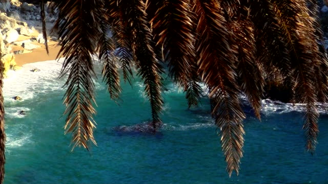 Waterfall and palm tree - HD video