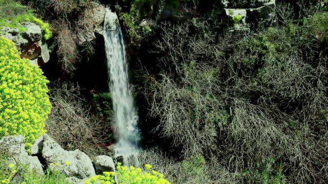 Waterfall falling from the rocks in the forest video