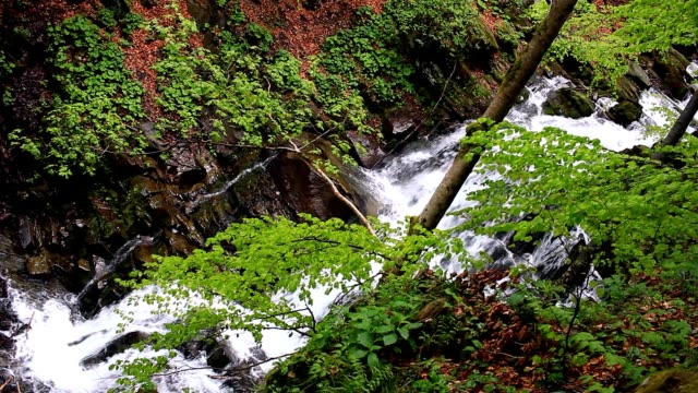 Waterfall falling in wooded area. Cascade waterfall in mountains. Forest river video