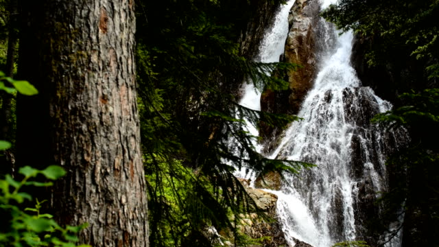 Waterfall in an old growth forest video