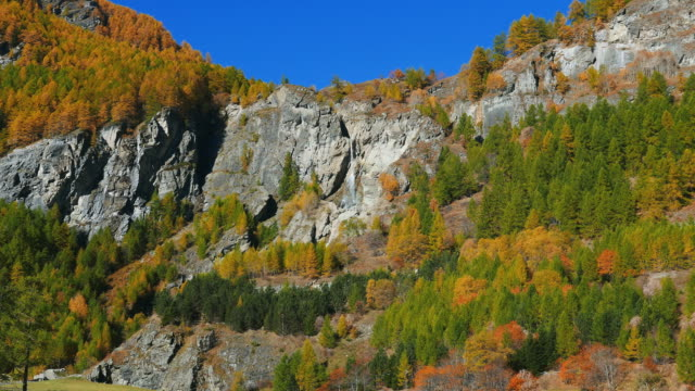 Waterfall in colorful woodland, autumn on the Alps video