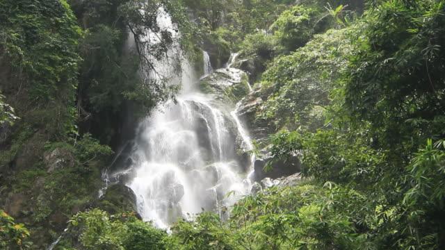 vidéos et rushes de cascade dans la forêt profonde - randonnée équestre