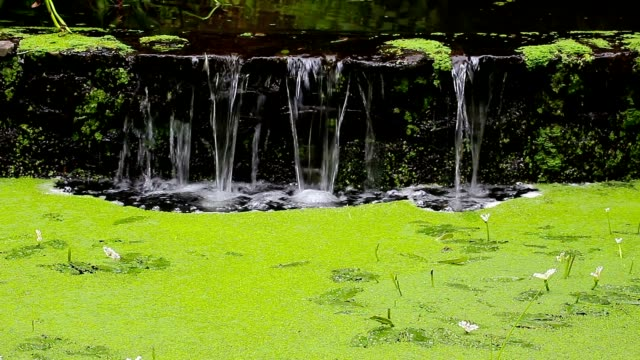 Waterfall in forest and marsh duckweed Waterfall in a forest and marsh duckweed grooved stock videos & royalty-free footage