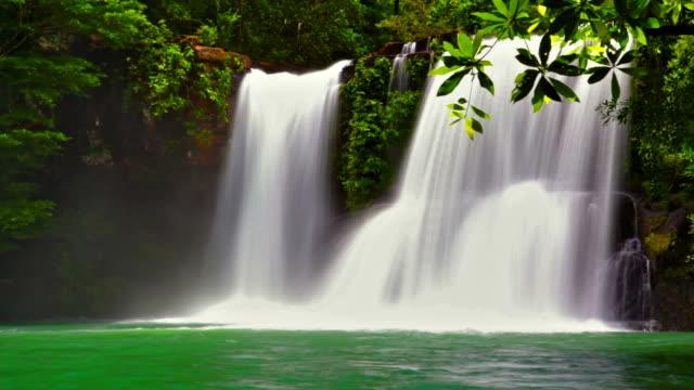 водопад в лесу - водопад стоковые видео и кадры b-roll