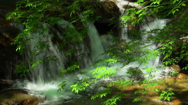 wasserfall im grünen wald / nishizawa-tal - kaskaden gebirge stock-videos und b-roll-filmmaterial