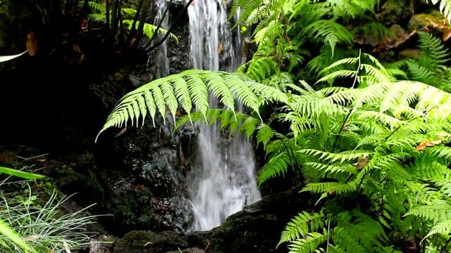 森林の滝 - 石垣点の映像素材/bロール