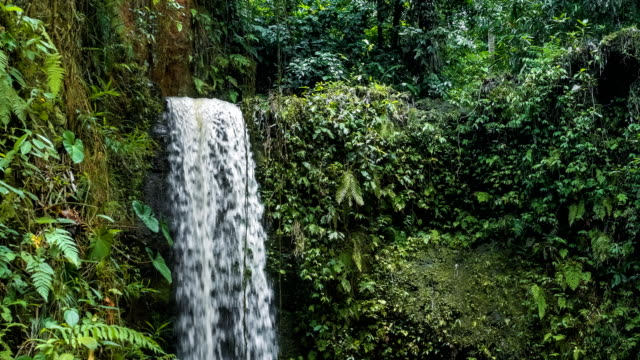 Waterfall in tropical jungle with lush green plants. High humidity video
