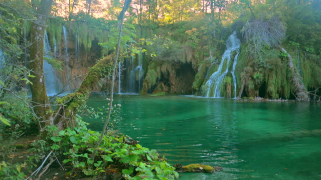 waterfall inside a green forest, plitvice lakes national park - дикая местность стоковые видео и кадры b-roll