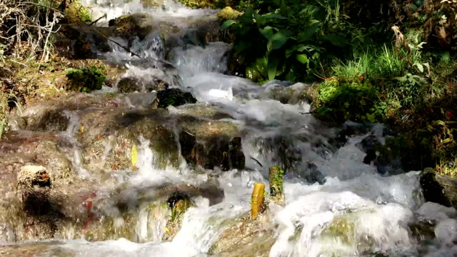 Waterfall nature background rock moss green video