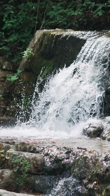 Waterfall. Stream in green forest. Beautiful small creek in rain forest video